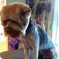 Adopt A Pet :: Oliver - Irmo, SC