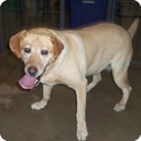 Adopt A Pet :: ABBIE - Medford, WI