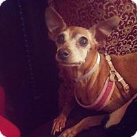 Adopt A Pet :: Harley - Brooksville, FL
