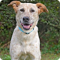 Adopt A Pet :: Abbi - Fort Valley, GA