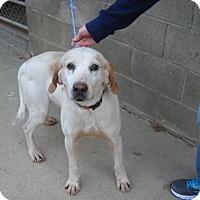 Adopt A Pet :: Dino - Rexford, NY