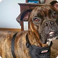 Adopt A Pet :: Beans - Woodbury, MN