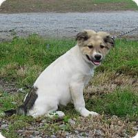 Adopt A Pet :: NEWT - Bedminster, NJ