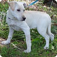 Adopt A Pet :: CeCe - Bedminster, NJ