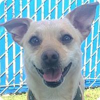 Adopt A Pet :: Guacho - Chula Vista, CA