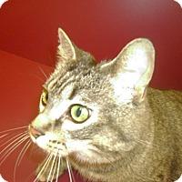 Adopt A Pet :: Daisy - Muscatine, IA