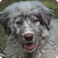 Adopt A Pet :: Sunny - Crocker, MO