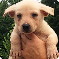 Adopt A Pet :: I'M ADOPTED Bianca Herrera - Oswego, IL