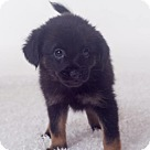Adopt A Pet :: Adorable Bear