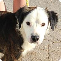 Adopt A Pet :: Nick - Potomac, MD