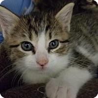 Adopt A Pet :: Violet - Santa Fe, TX