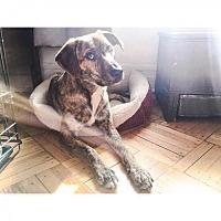 Adopt A Pet :: Ella Rose Edmondson - Brooklyn, NY