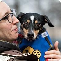 Adopt A Pet :: Comet - Washington, DC