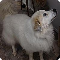 Adopt A Pet :: Kieran ADOPTED! - Bloomington, IL