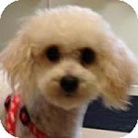 Adopt A Pet :: Addison - La Costa, CA
