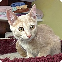 Adopt A Pet :: Crackerjack - Byron Center, MI