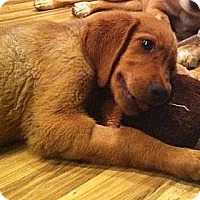Adopt A Pet :: Guppie - Foster, RI