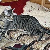 Adopt A Pet :: Rambler - Clinton, LA