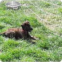 Adopt A Pet :: Cider - Meridian, ID