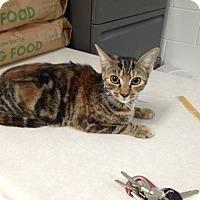 Adopt A Pet :: Abby - Lancaster, VA