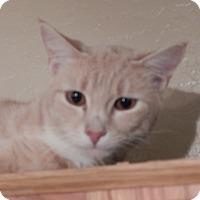 Adopt A Pet :: Sherwood - Mesa, AZ