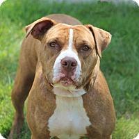 Adopt A Pet :: Marilyn - Eastpointe, MI