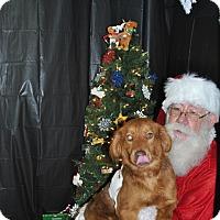Adopt A Pet :: Dalton 1-pending adoption - East Hartford, CT