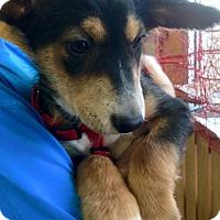 Adopt A Pet :: Waffles - Memphis, TN
