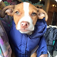 Adopt A Pet :: Rey - Pittsburgh, PA