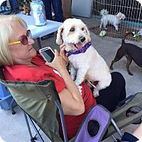 Adopt A Pet :: Molly - Scottsdale, AZ