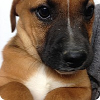 Adopt A Pet :: TULIP LITTER - Pompton Lakes, NJ