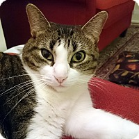 Adopt A Pet :: Lois - Toronto, ON