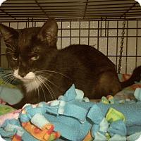 Adopt A Pet :: CAEL - Medford, WI
