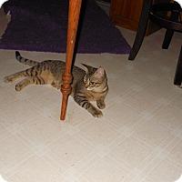 Adopt A Pet :: fraidy - benton, TN