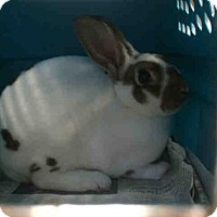 Adopt A Pet :: BRUCE BANNER - Boston, MA