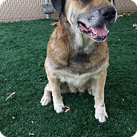 Adopt A Pet :: Sabrina - Chula Vista, CA