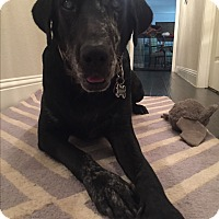 Adopt A Pet :: Mona - Brattleboro, VT