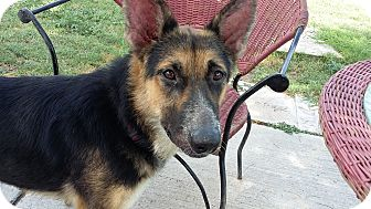 German Shepherd Dog Mix Dog for adoption in Brownsville, Texas - Samantha