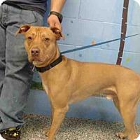Adopt A Pet :: A495769 - San Bernardino, CA