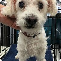 Adopt A Pet :: Robbie/Bells - Tucson, AZ