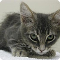 Adopt A Pet :: Snickers - Gary, IN