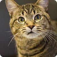 Adopt A Pet :: Abercrombie - Grayslake, IL
