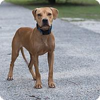 Adopt A Pet :: Helga - Daleville, AL