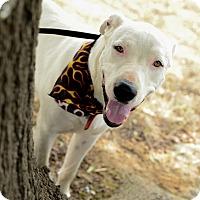 Adopt A Pet :: Theodore - Muldrow, OK