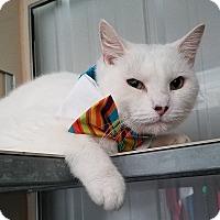 Adopt A Pet :: Danillo - Basehor, KS