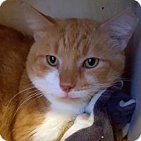 Adopt A Pet :: Webster - Salisbury, MA