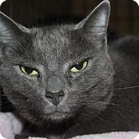 Adopt A Pet :: Emma - Louisville, KY