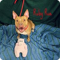 Adopt A Pet :: Ruby Rue - Melbourne, KY