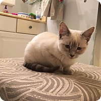 Adopt A Pet :: Trudy - Fairfax, VA