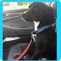 Adopt A Pet :: King - Tampa, FL